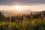 Der Große Arber im Bayerischen Wald bei Sonnenuntergang - 171176699