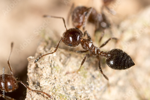 ant on the ground. macro