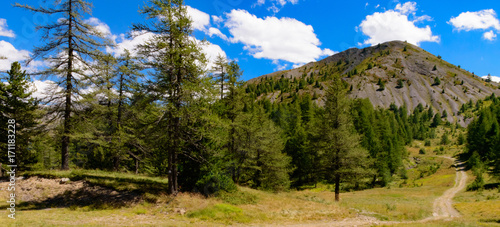 Fotobehang Weg in bos Sentier de randonnée