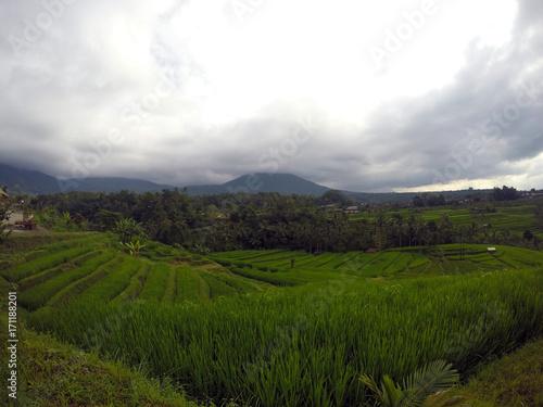 Papiers peints Bali Rice paddies in Bali, Indonesia