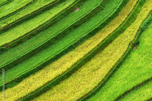 Papiers peints Les champs de riz contrast texture of green and yellow of rice field