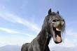 portrait humoristique cheval noir