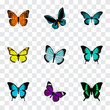 Realistic Butterfly, Danaus Plexippus, Copper And Other Vector Elements. Set Of Beauty Realistic Symbols Also Includes Butterfly, Tropical, Yellow Objects.