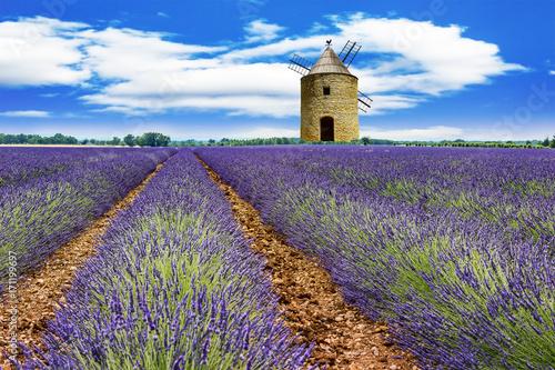 Moody lavender field in southern France © Edler von Rabenstein