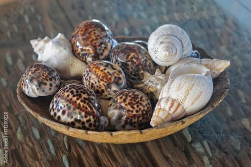 Keuken foto achterwand Zanzibar Sea shells