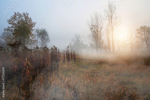 Misty and autumn morning in the woods