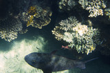 Coral reef under water, view from the top