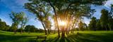 Sunlight through the trunks of trees. Morning in the summer park - 171220679