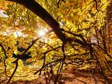 Autumn forest in sunlight. - 171222811