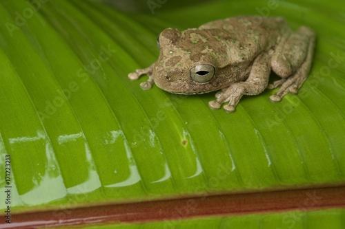 Fotobehang Kikker Treefrog