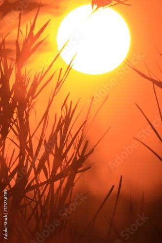 Papiers peints Orange eclat Sol 15