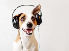 Dog In Headphones Listening To Music Sticker
