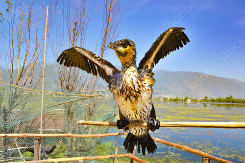 Staande foto Guilin Portrait of cormorant