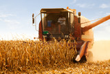 Combine Operator Harvesting Corn on the Field in Sunny Day - 171264451