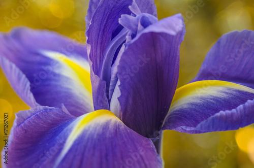 Aluminium Iris Ellipsis