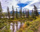 Flock of migratory birds flies - 171268445