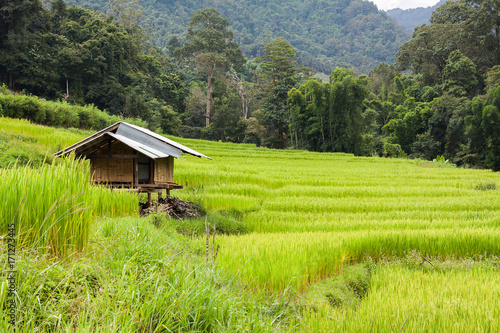 Fotobehang Rijstvelden Green terraced rice field with small hut at countryside in Chiang Mai, Thailand. Mountain nature view at background. Simple life of rural people in Asia