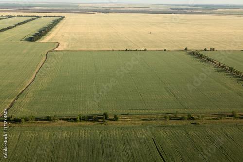 Papiers peints Beige wheat fields