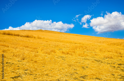 Fotobehang Herfst Gold field and blue sky with cloud.