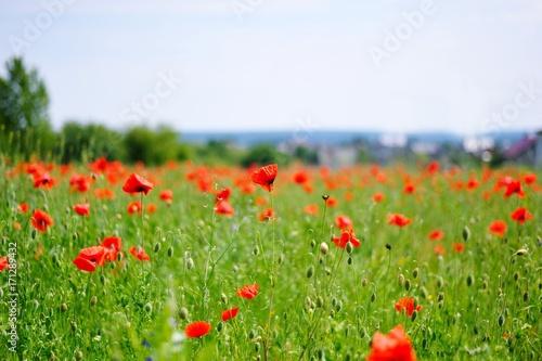 Foto op Plexiglas Klaprozen The poppy field