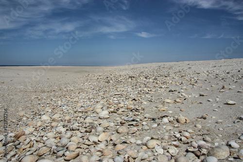 Fotobehang Donkergrijs morze muszli