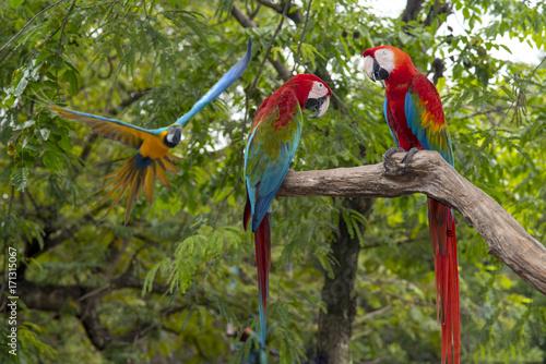 Aluminium Papegaai Beautiful macaw