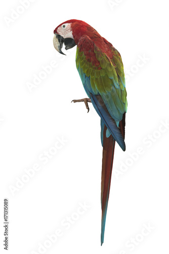 Plexiglas Papegaai Green winged Macaw isolated on white background