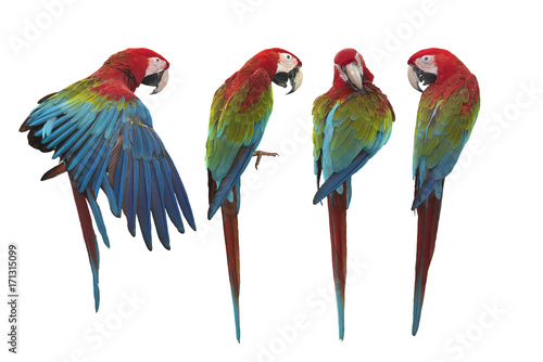 Fotobehang Papegaai Green winged Macaw isolated on white background