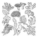 Corals and underwater plants in ocean or aquarium. Vector hand drawn pictures