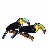 tukan birds