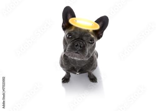 Fotobehang Crazy dog angel dog with halo