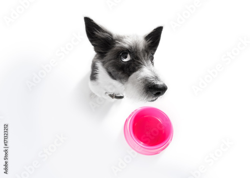 Fotobehang Crazy dog hungry dog with food bowl