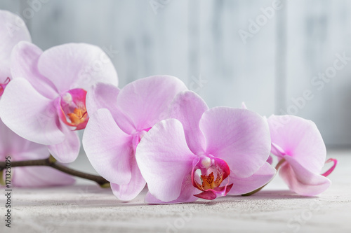 Pink orchid flower over grey concrete background - 171325095