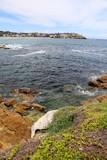 Bondi Beach Sydney in summer, New South Wales Australien