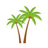 Palm tree with coconut isolated on white background. Vector stock.