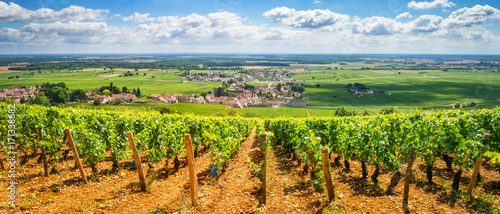 Foto op Canvas Wijngaard Vineyards of Burgundy, France