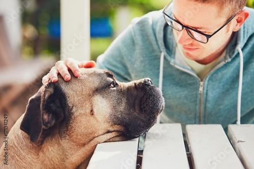 Fototapeta Devoted look of the huge dog