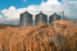field with grain silos for agriculture - 171354841