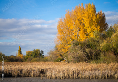 Fotobehang Herfst Autumn at a fish pond