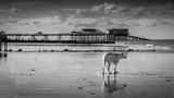 Dog & Pier