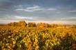 couleur d automne, vigne