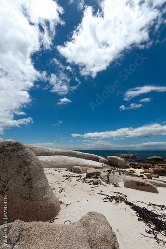 Foto op Canvas Nachtblauw Boulders Penguin Colony, African Penguins in Boulders Beach, Cape Peninsula, South Africa