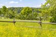 sunny rural scenery