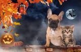 Small cat and dog sitting beside pumpkin - halloween