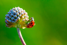 A ladybug on the flower.