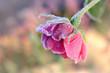 Blumen 845