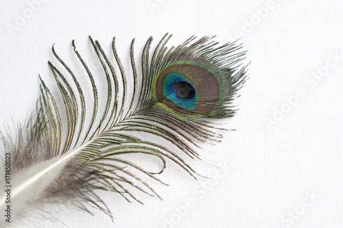 Fotobehang Pauw Close-up of a peacock feather on a white background