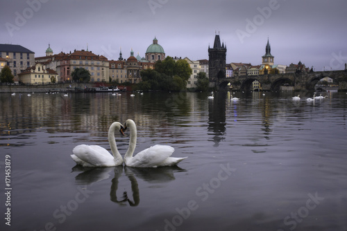 Two swans in shape of heart Poster