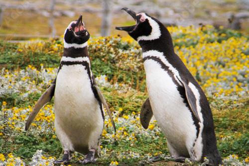 Fotobehang Antarctica Penguin, Falkland Island