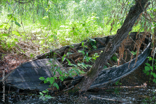 Papiers peints Naufrage Remains of old broken wooden boat on shore of river under a tree